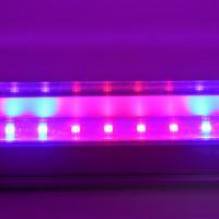 Светодиодный светильник T8-2835-0.6FS R:B=4:2 8W ( 4 красных 2 синих ФИТО свет )