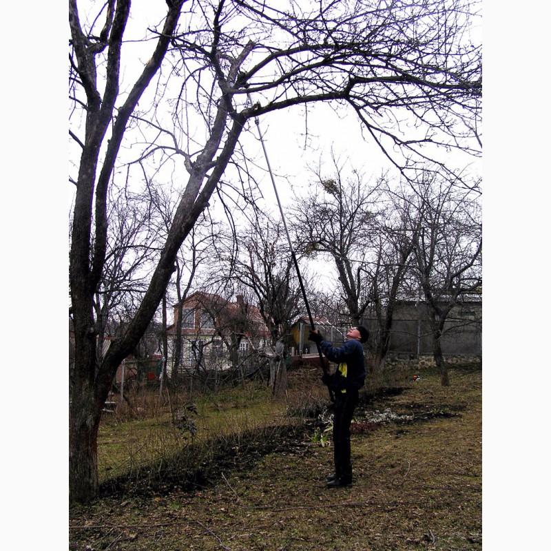 Фото 2. Зимняя обрезка плодовых деревьев