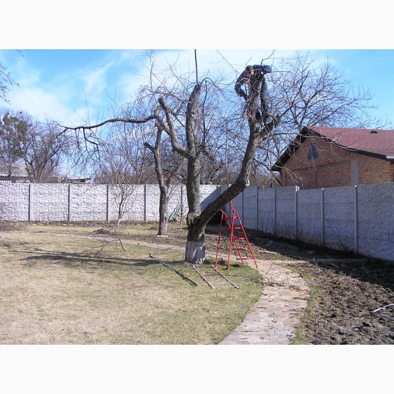 Фото 3. Зимняя обрезка плодовых деревьев