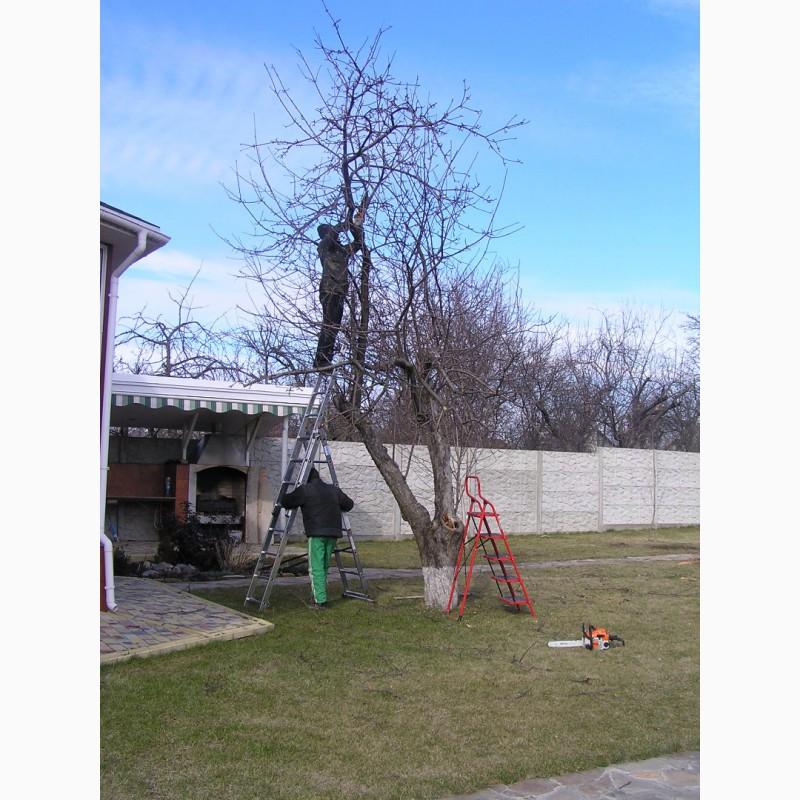 Фото 4. Зимняя обрезка плодовых деревьев