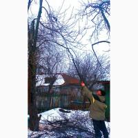 Зимняя обрезка плодовых деревьев