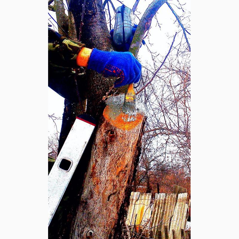 Фото 6. Зимняя обрезка плодовых деревьев