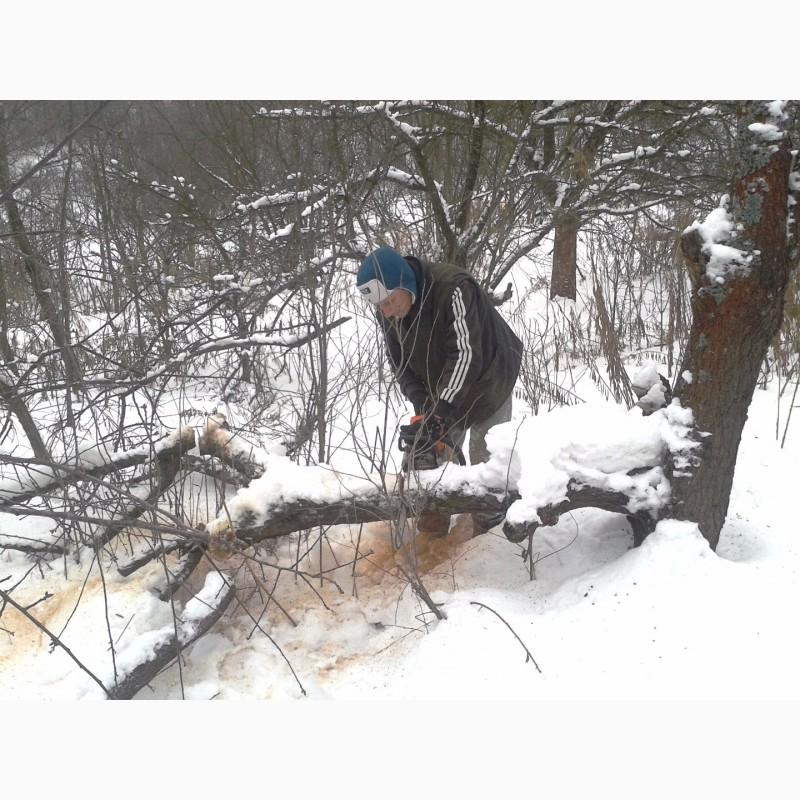 Фото 8. Зимняя обрезка плодовых деревьев