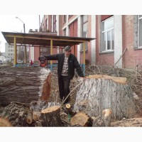Спил деревьев Киев. Удаление деревьев Киев. Дробление веток