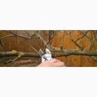 Обрезка Спил деревьев, Дробление веток, демонтажные и земляные работы Вишневое