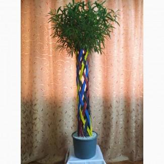 Плетене дерево Вишиванка