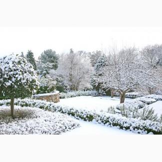 Уход за садом. Подготовка участка к зиме