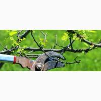 Аренда измельчителя веток, земляные и демонтажные работы, обрезка деревьев Ирпень